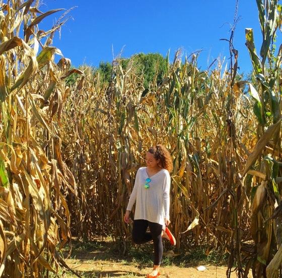 OCR Corn